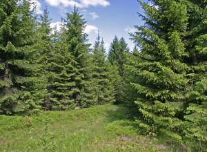 Gjennomsnittsligning eller tømmerkonto?