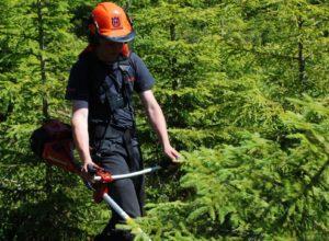 Økt satsing på skogkultur under fordeling av LUF-midler for 2020