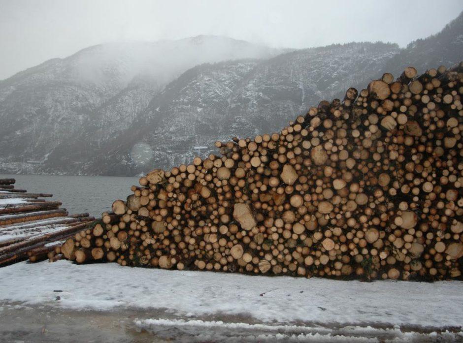 Hogsten øker mest i Vestlandsfylkene. Foto: Anders Hals