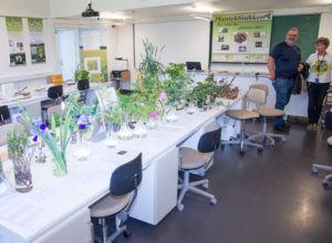 Feirer 125 års forskning på plantehelse
