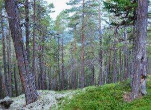 Skogvernet i Norge er evaluert