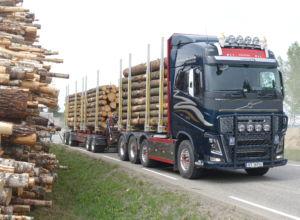 Bruer til besvær for skognæringen