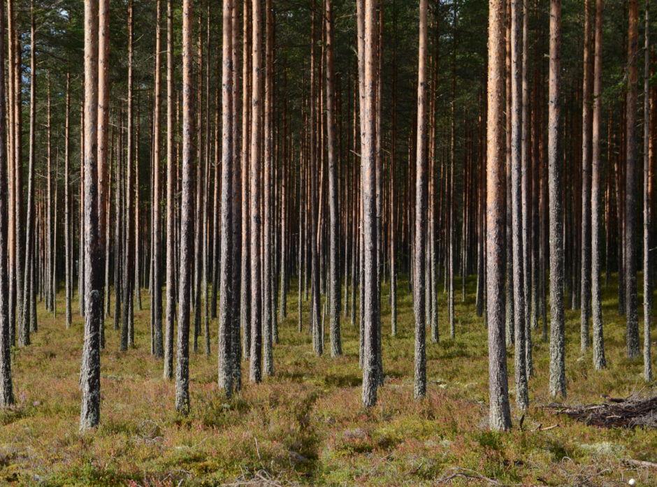 Forskningsrådet er positive til planene om å utnytte skogens bioressurser.