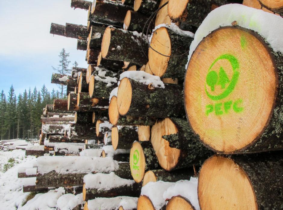 MILJØSERTIFISERT: Den grønne PEFC-logoen betyr at tømmeret kommer fra skog som er drevet på en bærekraftig måte. Norsk skogbruk kartlegger og tar vare på arealer som er viktige for truede dyr og planters livsgrunnlag.