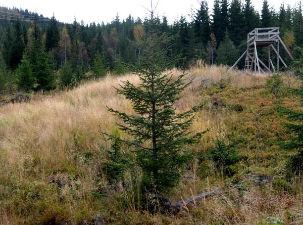 Aktiv bruk av utmarka kan gi skogeierne ekstrainntekter.