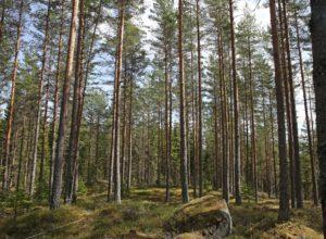 Norske krav til FSC Controlled Wood er godkjent