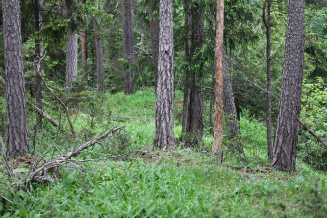 Naturindeksen 2020 – fortsatt positiv utvikling i skog