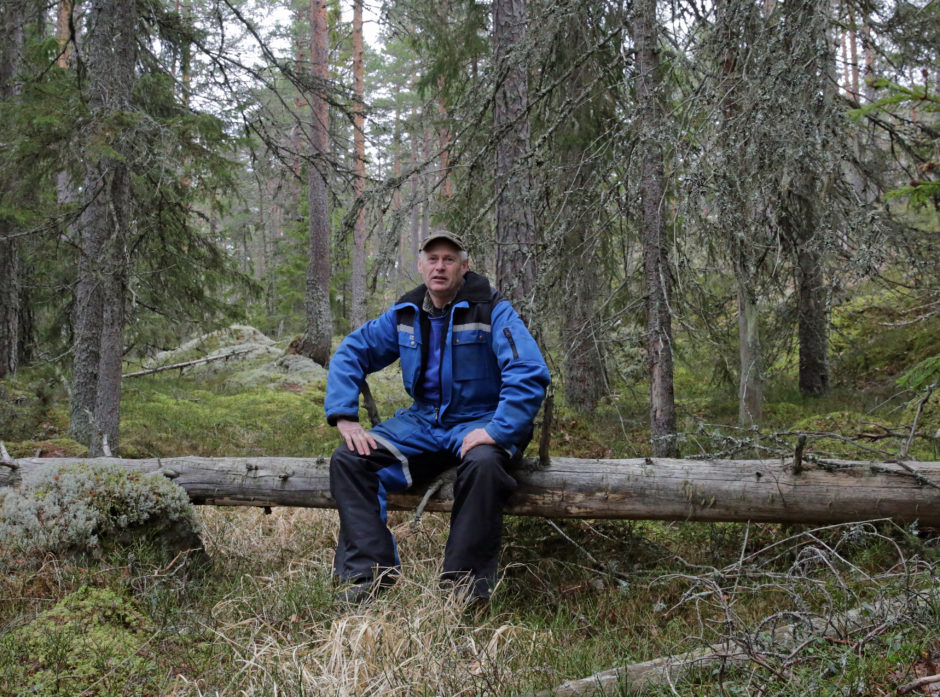 Gammel grov furuskog og gran i oppløsingsfase gir verneverdi i Terje Gravers skog.
