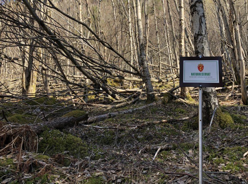 29 nye skogområder vernet som naturreservat. Foto: Ida Aarø