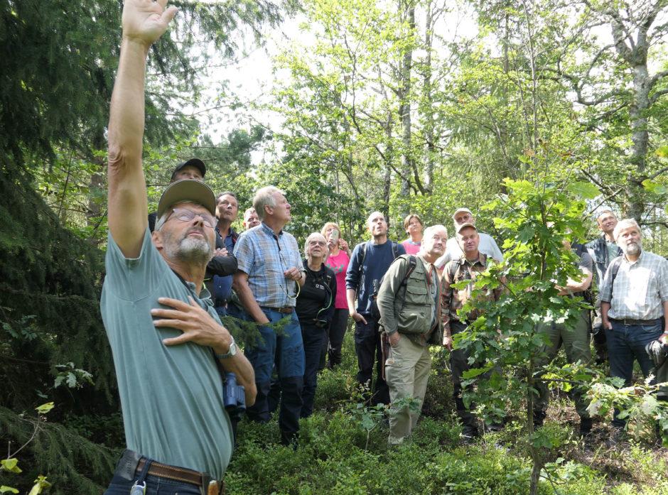 Skogeierne må se opp for barkbiller. Den lille granbarkbillen har også gitt skade på Vestfoldskogen konstaterte skogsentomologene fra NIBIO. Her peker seniorforsker, divisjon for skog og utmark Svein Solberg ut et slikt angrep.