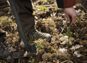 5 millioner til klimaskogplanting på gjengroingsarealer