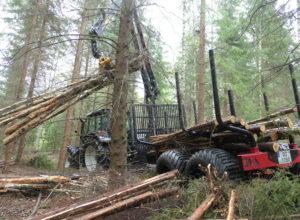 Proffhåndverk i skogen