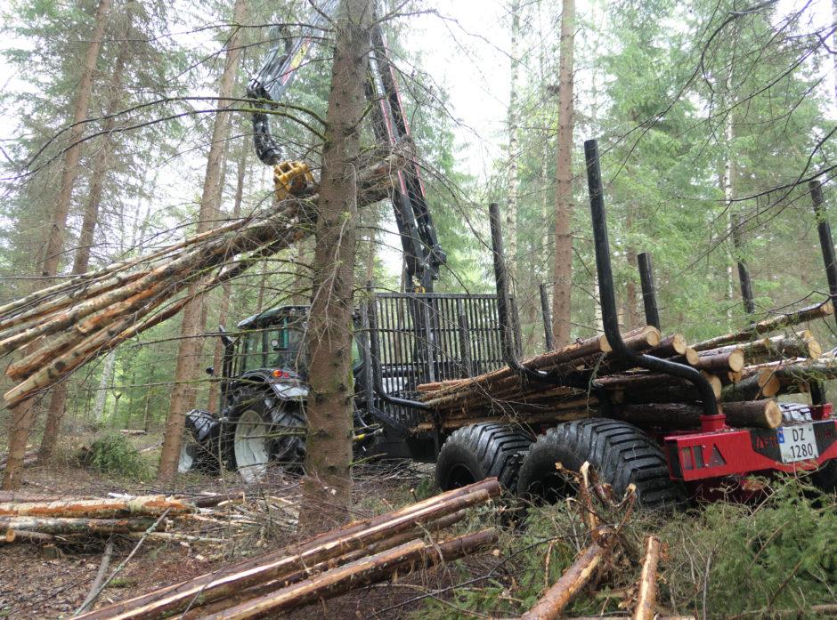 Med riktig utstyr og trening kan tynningsvirket lirkes ut uten å skade de trærne som skal bli verdifullt tømmer i fremtiden.