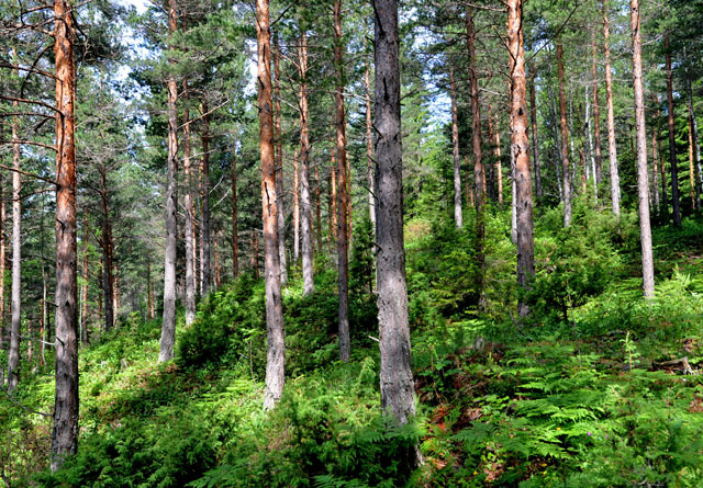 Kalk- og lågurtfuruskog er i kategorien VU sårbar i Norsk Rødliste for naturtyper, regisrtert hos Artsdatabanken.