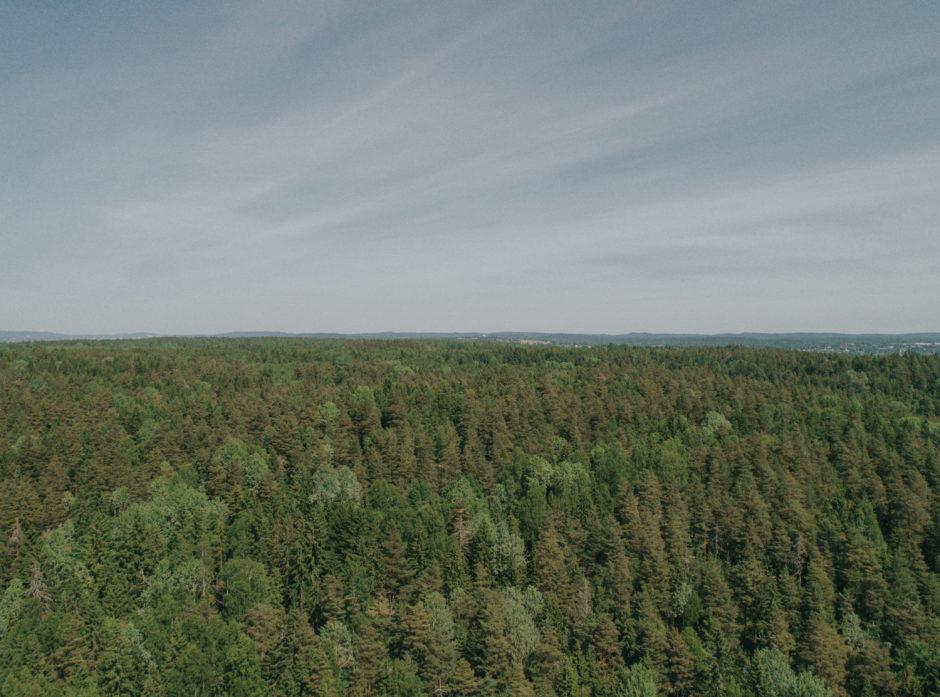 Den norske skogen klarte seg bra gjennom 2019, med lite klimaskader og langt færre branner enn året før. (Foto: Jørgen Nordby/Skogbrand)