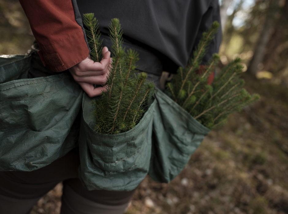 Skogplanting er et viktig klimatiltak.