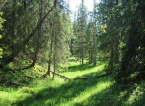 16 nye skogområder vernet frivillig