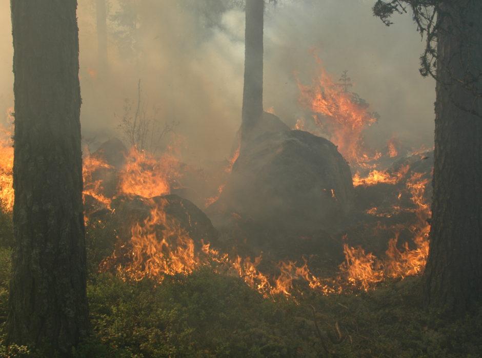 Men endret klima kan vi forvente økt hyppighet av ekstreme værhendelser, som blant annet kan gi økt fare for skogbrann. Foto: Anders Hals