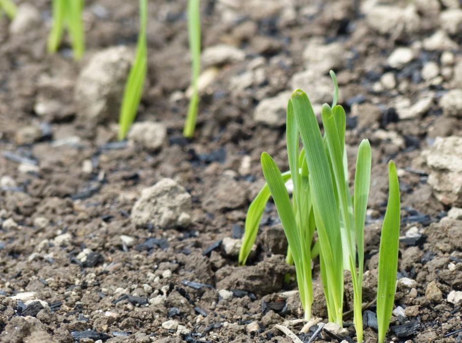 Det er et betydelig potensial for å binde mer CO2 ved å legge til rette for økt fotosyntese og bruk av biomasse. Foto: Adam O'Toole
