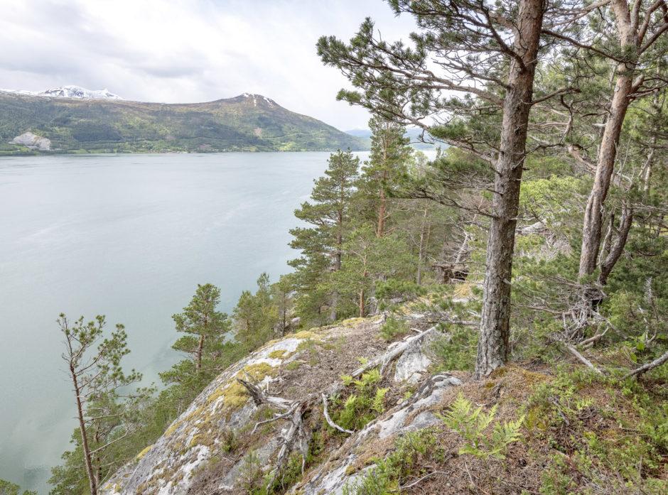 Kystskogen på Vestlandet er viktig. Foto: Øyvind Leren
